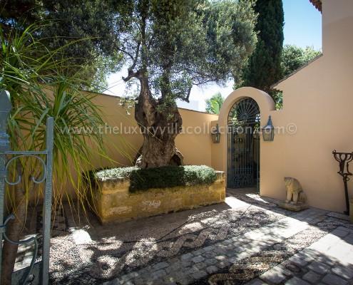 Villa Las Artes Marbella old olive tree