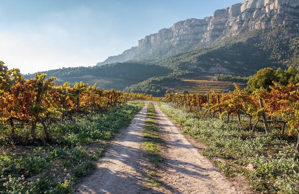 priorat vineyard in the mountains