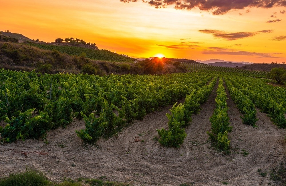 rioja vineyards at sunset