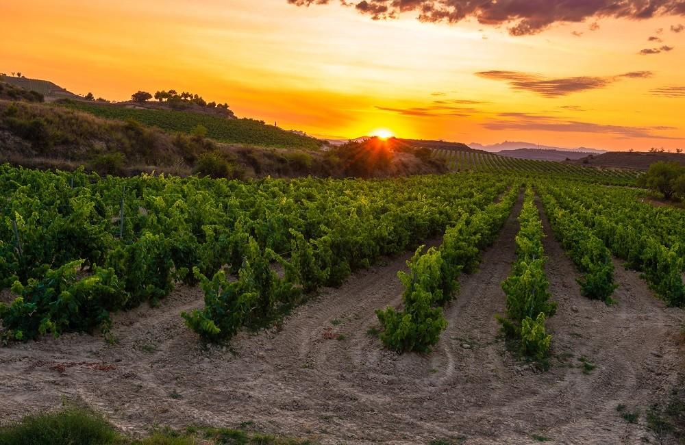 rioja vineyards at sunset